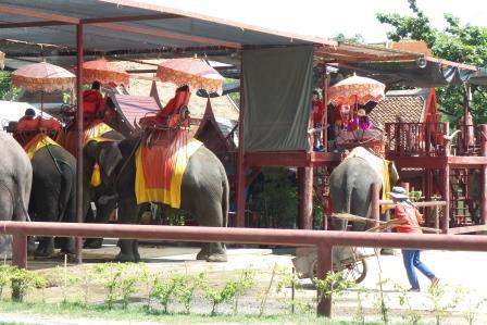 Eléphants à Ayatthaya